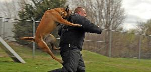 spiel hund aber kein echtes hund